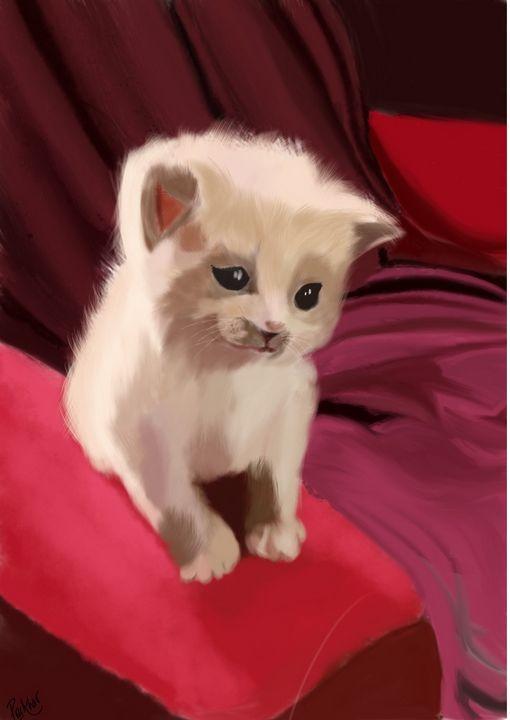 Kitten - Prakhar