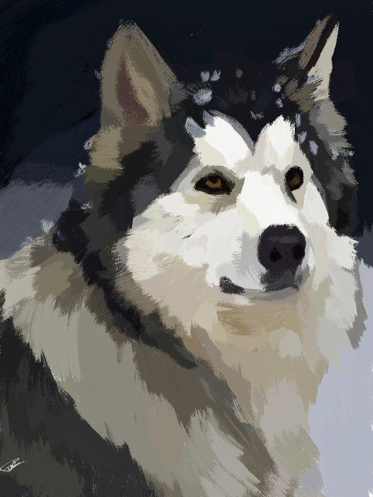 Siberian Husky - Prakhar