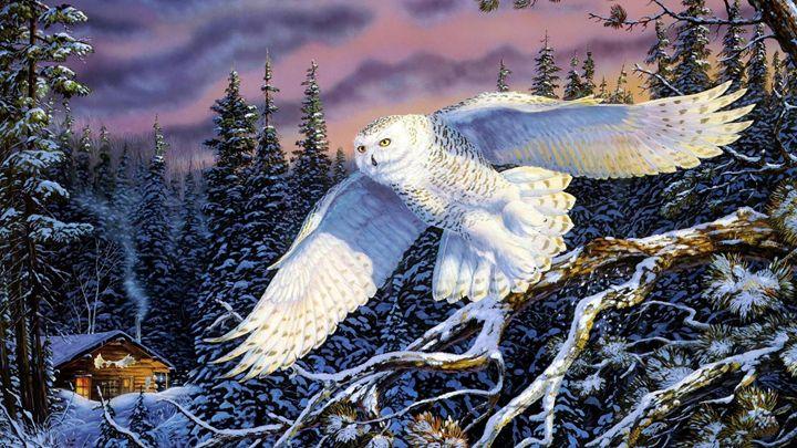 Skylight owl - Alexis Hayes Brooker