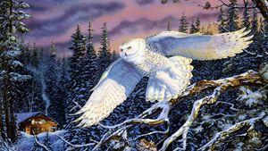 Skylight owl