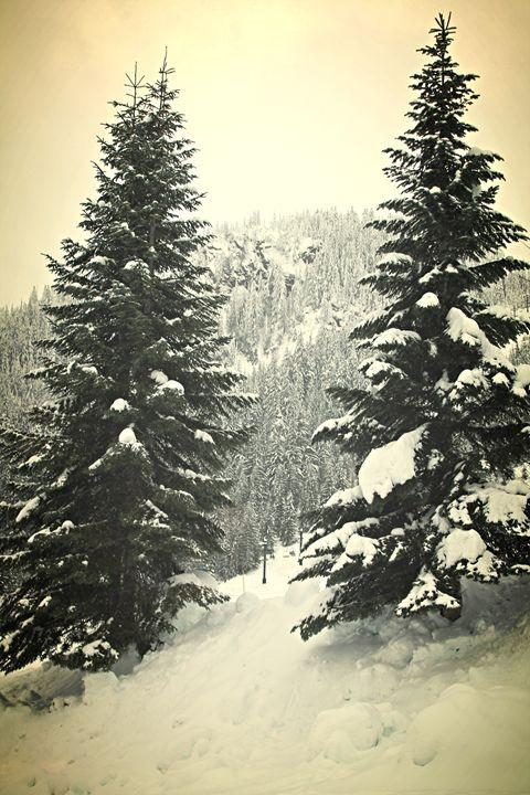Antique Christmas Trees - Rachel Vdolek