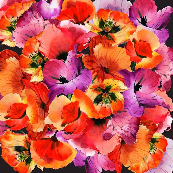 Poppies for Fun - Beautiful Quotes