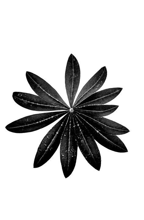 leaf - ace canvas