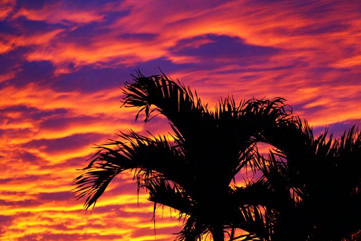 Tropical Showoff - Lens Art By Florene