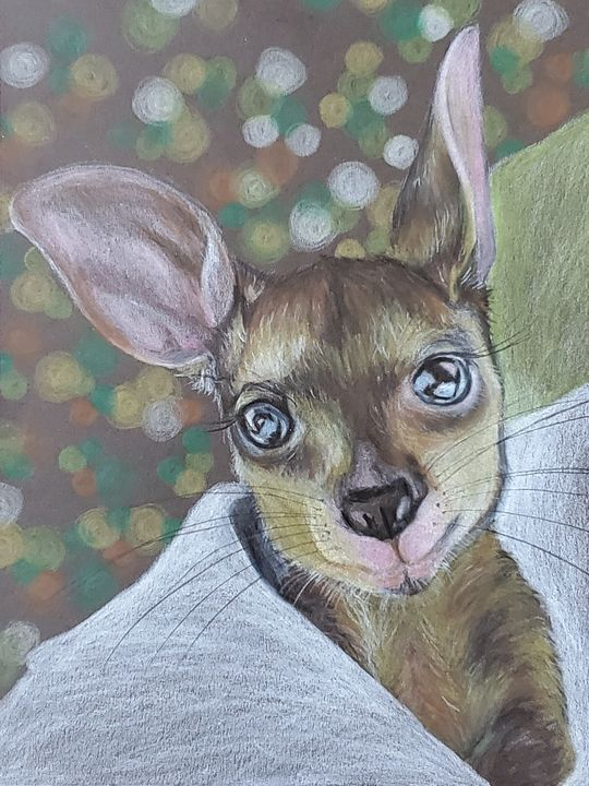 Rescue 'Roo - The Wandering Acorn