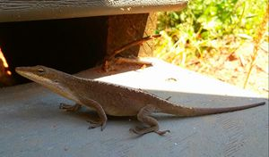 Little Lizard Scaling the Stairs