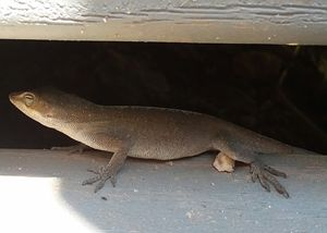 Little Lizard Scaling the Stairs 2