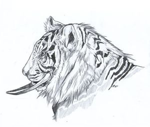 Tusked Tiger