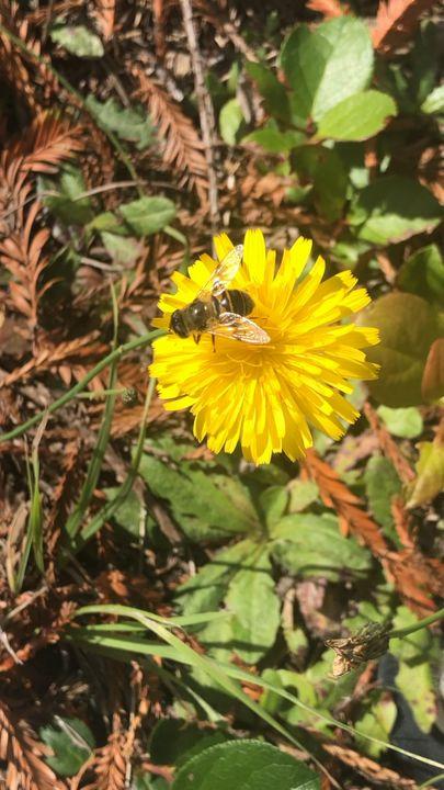 Dandelion Bee - ChocolateUniverse