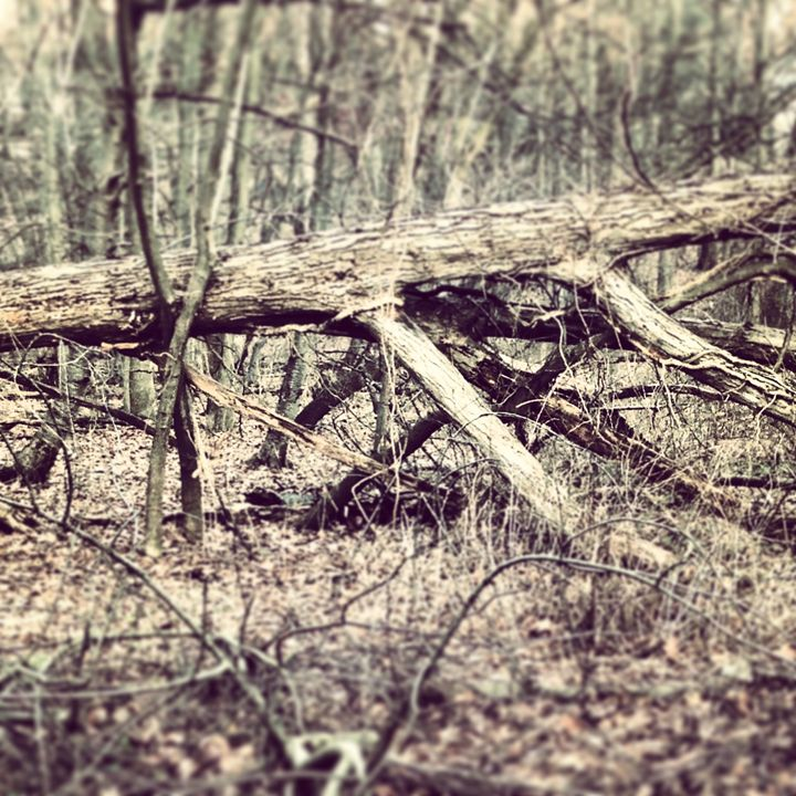 """""""Fallen Tree"""" - Pat Geco"""