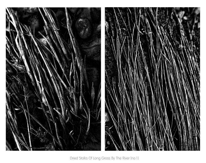 Dried Stalks Of Long Grass - Solomon Walker Designs