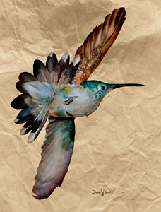 Hummingbird Grace