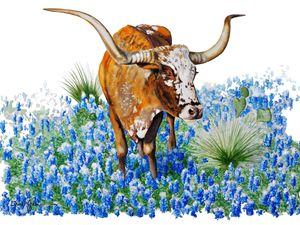 BlueBonnet Texas Longhorn