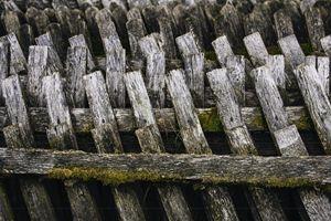 Mossy Fence I