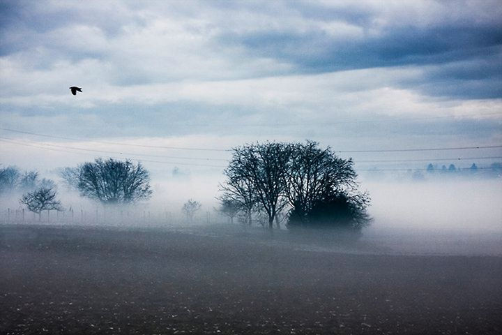 Through the Fog - Pecek Gallery