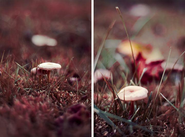 Autumn Shrooms - Pecek Gallery