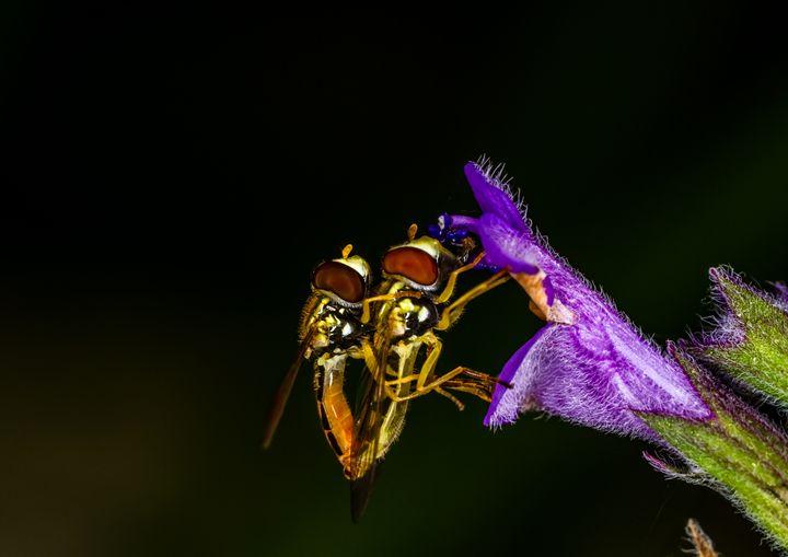 A Flower for my Love - Bryant Heffernan