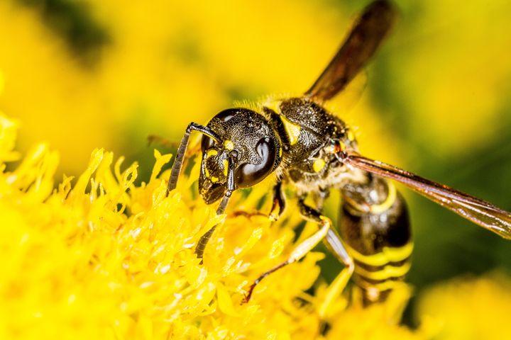 Breakfast for a Wasp - Bryant Heffernan