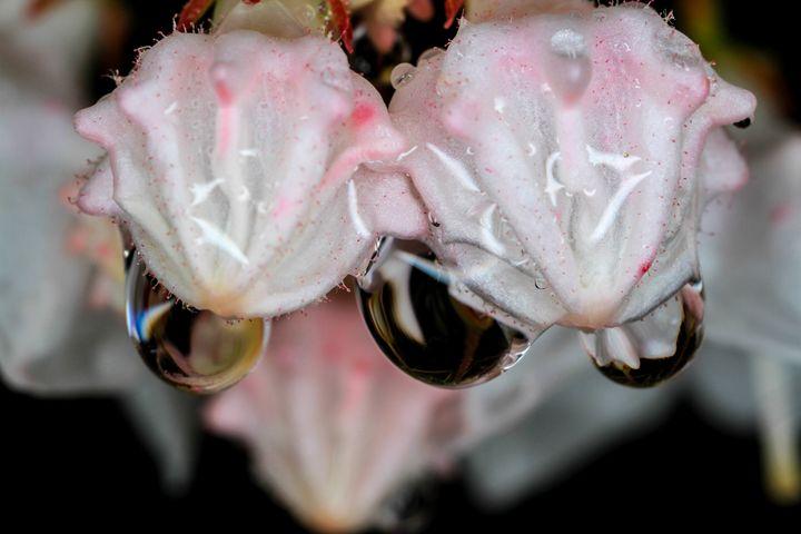 Raincoated Blossoms - Bryant Heffernan