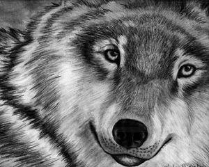 Lone Wolf Beauty