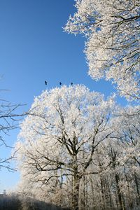 Winter Trees and Three Birds