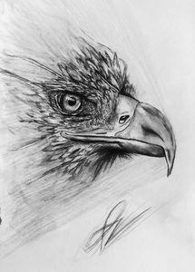 Bird head thing