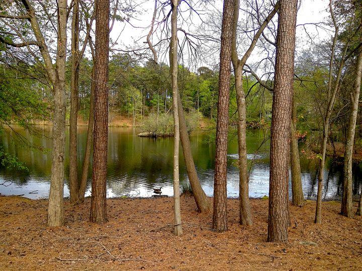 Trees Near Lake - Seema Kumar