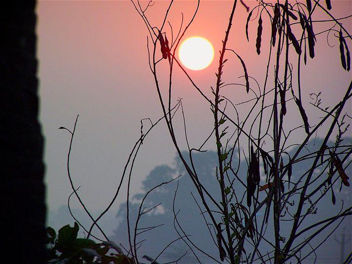 Rural Sunrise - Seema Kumar