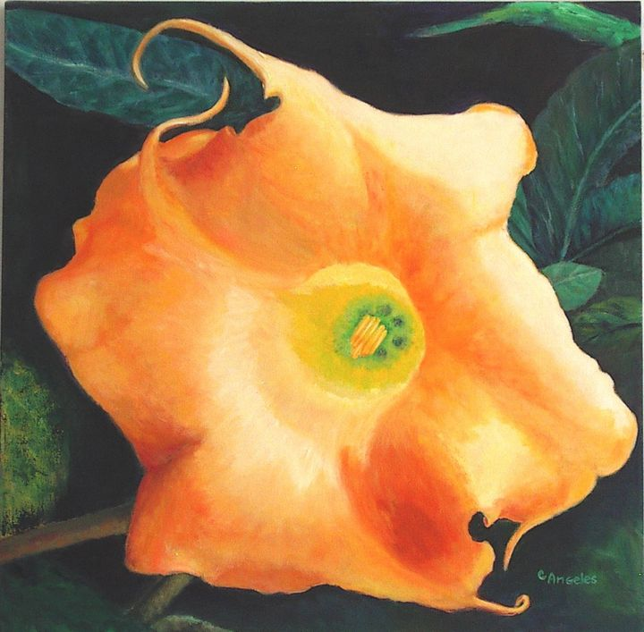 Datura - Oils and More