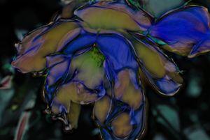 Blue Flower - bloomingvinedesign