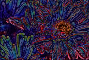 Blue and Red Abstract daisies