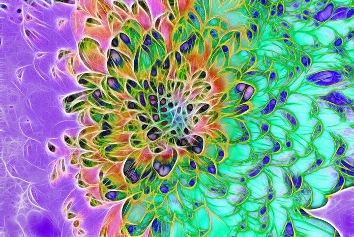 Abstract Peacock Chrysanthemum - Artofmine