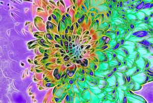 Abstract Peacock Chrysanthemum