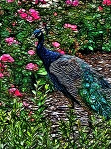 Peacock with pink Flowers - bloomingvinedesign