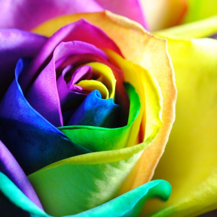 Rainbow Roses 11 - Artofmine