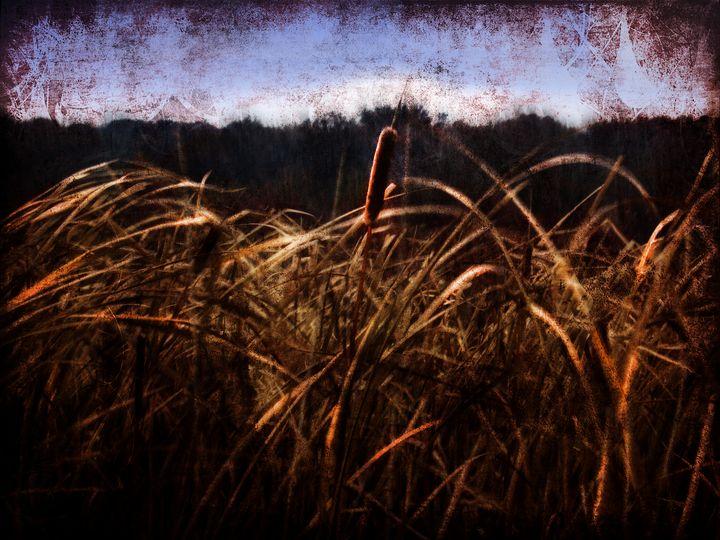 Cattails In The Wind - Artofmine