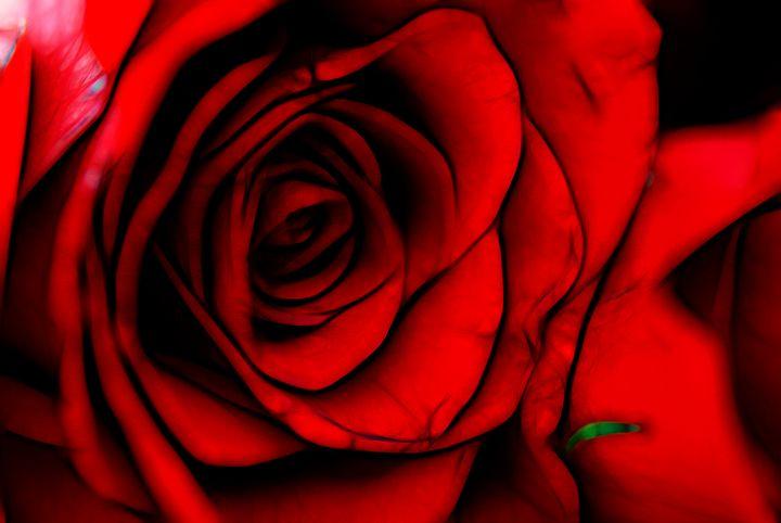 Reddest Rose - Artofmine
