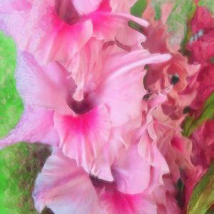 Light Pink Gladiolas