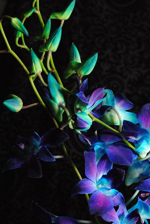 Purple Orchid Buds - Artofmine
