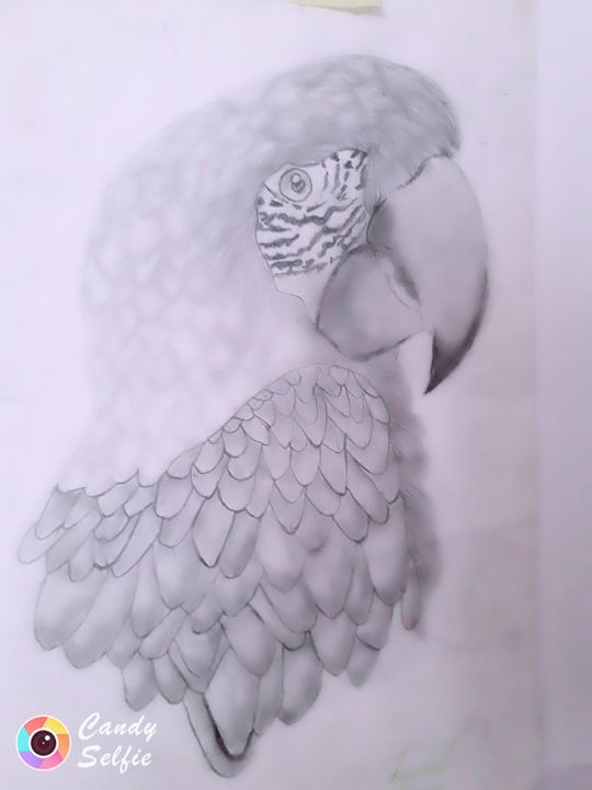 Parrot - Luminita dumitru