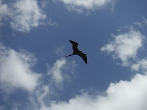 Soaring Above