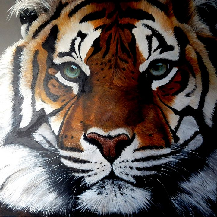 tiger - gallery zoombeeart