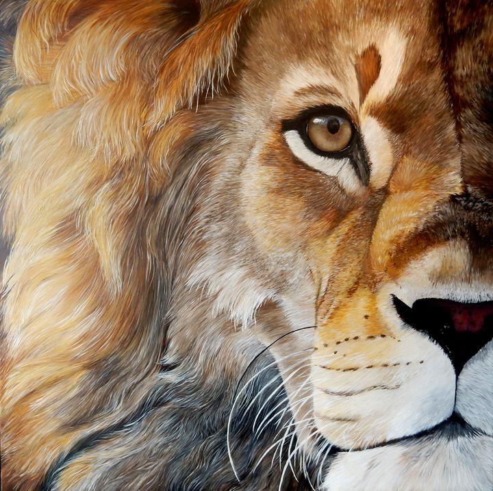 sunset lion - gallery zoombeeart