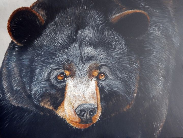 black bear - gallery zoombeeart