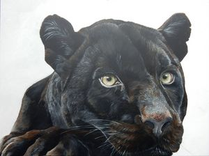 black jaguar - gallery zoombeeart