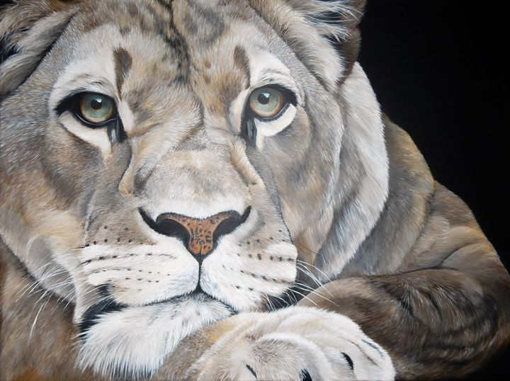 lion - gallery zoombeeart