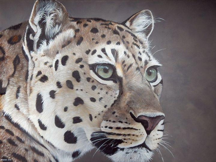 leopard - gallery zoombeeart
