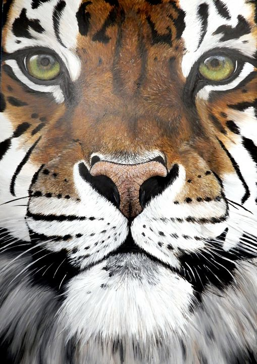 close up tiger - gallery zoombeeart