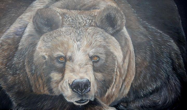 brown bear - gallery zoombeeart
