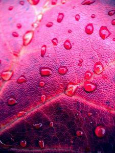 Fall Leaf - Janet Malsam